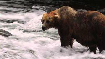 Brooks Falls, UGLY, fishing the falls July 2013 by Stephen B