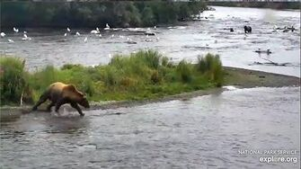 3 Aug 2019 Humphrey Chases Down a Fish, video by mckate