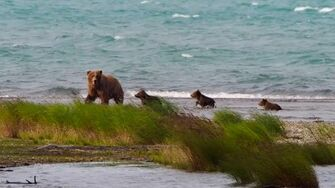 Katmai National Park, Alaska, video by Kevin Forey