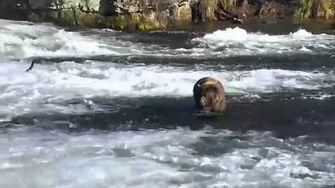 Brooks Falls - Katmai National Park, Alaska Cam 10-14-2015 14 49 21 - 14 54 17 Explore Recorder