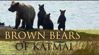 Brown Bears of Katmai National Park 2019 Season by Deon Mitton-2