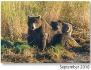 ELECTRA 284 PIC 2016.09.xx w 2 SPRING CUBS 901 NPS PHOTO 2017 BoBr PG 47