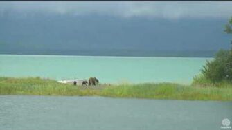 6 40 pm 070116 mom 284 Electra and cubs Katmai National Park and Explore by Mickey Williams