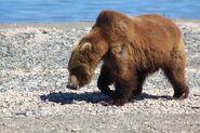 INFO BEARS SEEN 2015.06.15 18.xx 284 ELECTRA BL FB