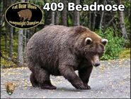 BEADNOSE 409 PIC 2015.10.13 409 WINS 2015 FAT BEAR CONTEST 01 CHAMPION PHOTO
