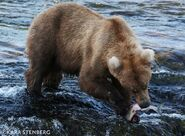 INFO BEARS SEEN 2019.06.19 128 GRAZER KARA STENBER BL 2019.06.20 15.57 FB POST PIC 03 ONLY
