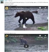 WHO SUBADULT MALE 2019.08.15 LIMPING RIGHT FRONT LEG 2020.01.04 COMMENTS 01