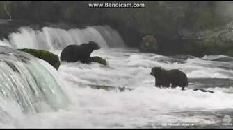 Walker has words with Otis and then displaces Bear ( need id) sept 11, 2016 video by Ratna Narayan