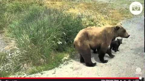 402 and 4 spring cubs July 8, 2015 by Juanita Roper