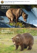 2014 FAT BEAR TUESDAY 2014.09.30 10.30 KNP&P FB POST 409 BEADNOSE 2014.07.24 vs 2014.09.24