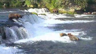 Bear Cam - Brooks Falls Cam 07-16-2017 21 00 07 - 21 59 58 Explore Recorder video