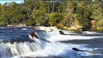 Bear sub adult 812 going over the falls 2018 09 05 by Erum Chad (aka Erie)