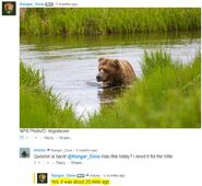 INFO BEARS SEEN 2017.06.21 APPROX 10.54 410 RDAVE COMMENT 2017.06.21 11.14 APPROX 20 MINS AGO