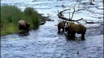 39 (not 153) & Cubs ~ 2017 07 08, video by Victoria White