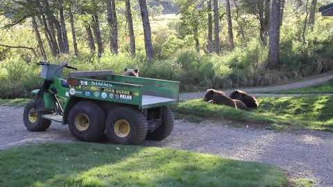 Brooks Bears In Camp 2013 by Kara Stenberg-3