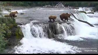 Bear sow 813 Nostril cub went over the falls Katmai 2019 06 29, video by Erum Chad