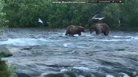 07.07.2016 - 747 and 814 Lurch dance on the falls video by Brenda D