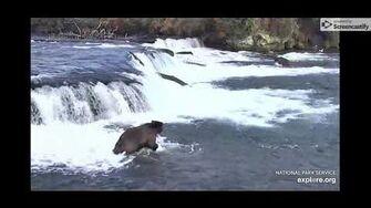 Brown Bear Cam - 10 21 19 by Elle Lynn (aka campfiredavis)-0