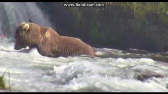"""274 Overflow (not 469 """"Patches"""") Brooks falls Katmai 2016 10 06 21 06 57 484 by Erum Chad (aka Erie)"""