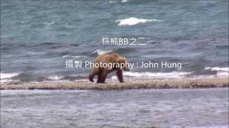 棕熊BB 284 and her 2 yearlings play on the point 2017 07 11 or prior, video by John Hung-0