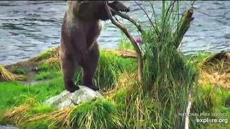 20 Aug 2018 901 Adjusts Island Willow, video by mckate