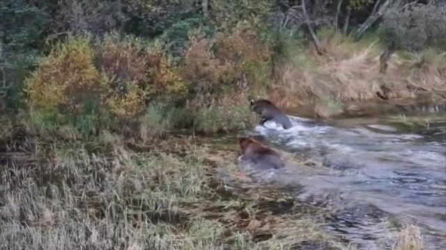 Audio of bear spat September 10, 2016 409 Beadnose w 2 cubs & 94 w 1 cub by Ana-0