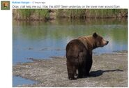 INFO BEARS SEEN 2018.06.01 17.00 409 or WHO RANGER RUSS 2018.06.02 09.51 COMMENT w PHOTO - 151 WALKER MAYBE