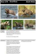 OVERFLOW 274 INFO 2014 BoBr PAGE 20