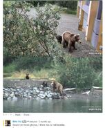 708 PIC 2019.07.12 w 2 SPRING CUBS DEELYNND 01-03 w MIKE FITZ 2019.07.13 11.10 COMMENT w ID OF 708 02