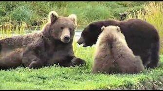 Bear 708 Amelia and cubs 2019 Season by Deanna Dittloff (aka deelynnd)