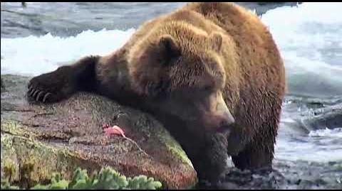 Bear 812 2018 Season by Deanna Dittloff