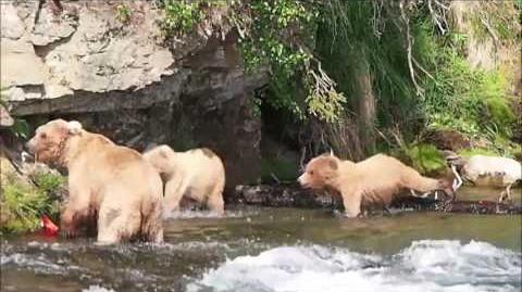 Katmai National Park Movie June 2017 video by Ken Hilfiker