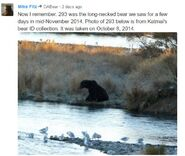 LONG NECK 293 PIC 2014.10.08 RMIKE POSTED 2016.11.09 13.11 FROM KNP&P BEAR ID COLLECTION w COMMENT