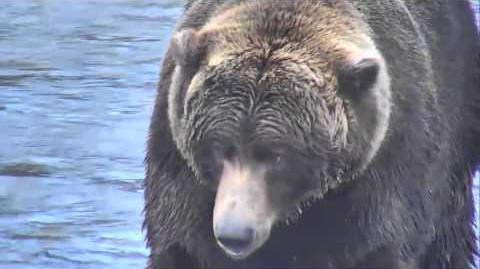 68 Brooks Falls - Katmai National Park, Alaska Cam 10-08-2015 19 18 25 - 19 23 24 (time is probably Pacific Time) Explore Recorder video