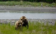INFO BEARS SEEN 2015.06.09 or BEFORE 856 COURTING DIVOT 854 RMIKE BIGGER IS BETTER BLOG KNP&P FB PIC ONLY