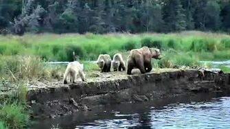 482 Brett & yearlings ~ 2019 07 18, video by Victoria White