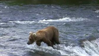 Katmai NP Day 1 June 26, 2009, video by foreseit