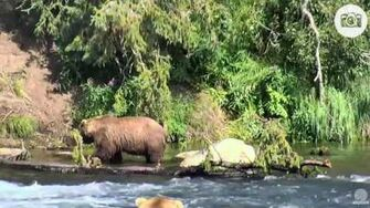 4 40pm 071316 505 joins 755 Scare D Bear and 480 Otis Katmai National Park and Explore by Mickey Williams