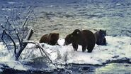 ELECTRA 284 PIC 2017.10.xx w 2 CUBS GREENRIVER POSTED 2020.02.09 08.04 02