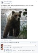 INFO BEARS SEEN 2015.06.07 BL FB COMMENT SAYS 854 DIVOT SEEN TODAY