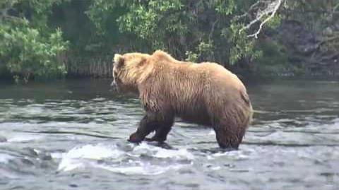 07.11.2017 - 505, a Beautiful Bear video by Brenda D