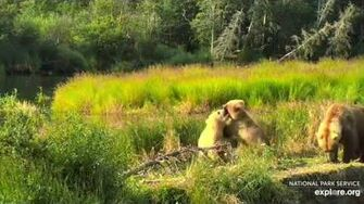 23 Jul 2019 482's Blondies Play on Closed Trail, video by mckate