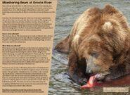 MONITORING BEARS AT BROOKS RIVER 2017 BoBr