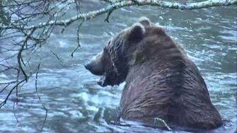 Brooks Falls Brown Bears Cam 09-22-2018 09 00 10 - 09 59 57 Explore Recorder Video