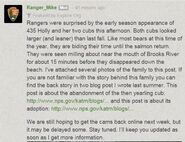 INFO BEARS SEEN 2015.06.02 HOLLY 435 w HER YEARLING CUB & 503 2.5 Y O ADOPTED CUB RMIKE FEATURED COMMENT