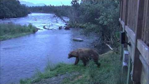08.01.2017 - Mama and Single Cub at the Falls video by Brenda D-0
