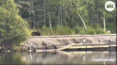Spring Cub Lower River August 28, 2014 video by JoeBear