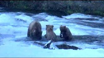 Beadnose 409 and her cubs late night fishing at Brooks Falls. 00