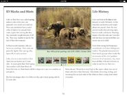 CUBS PAGE 05 w 438 2003 YEARLINGS