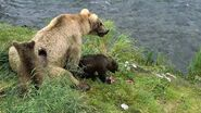 GRAZER 128 PIC 2016.07.08 w 2 of 3 SPRING CUBS JEN POSTED 2019.05.12
